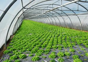 тентовые теплицы greenhouse